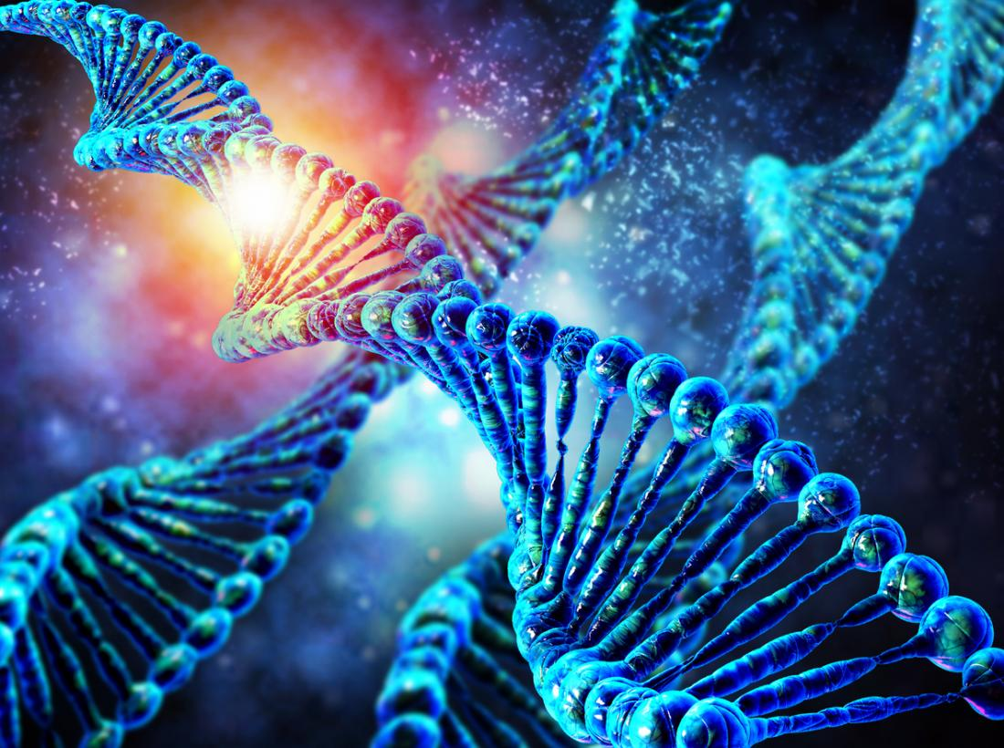 How an autism gene mutation alters brain development