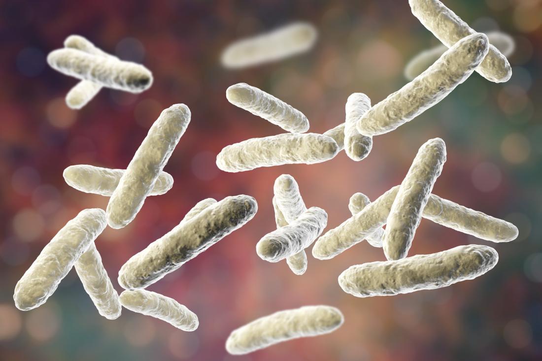 illustration of lactobacillus bacteria