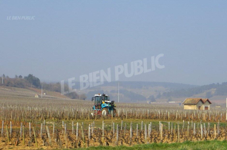 cv type ouvrier viticole modele