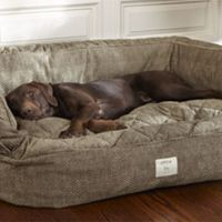deep dish dog bed dog bed with bolster lounger deep dish ...