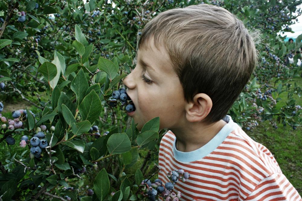 Garden Design: Garden Design With How To Grow Blueberries