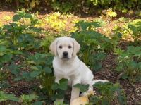How Can I Keep Dogs Out of My Flower Beds? | Garden Guides