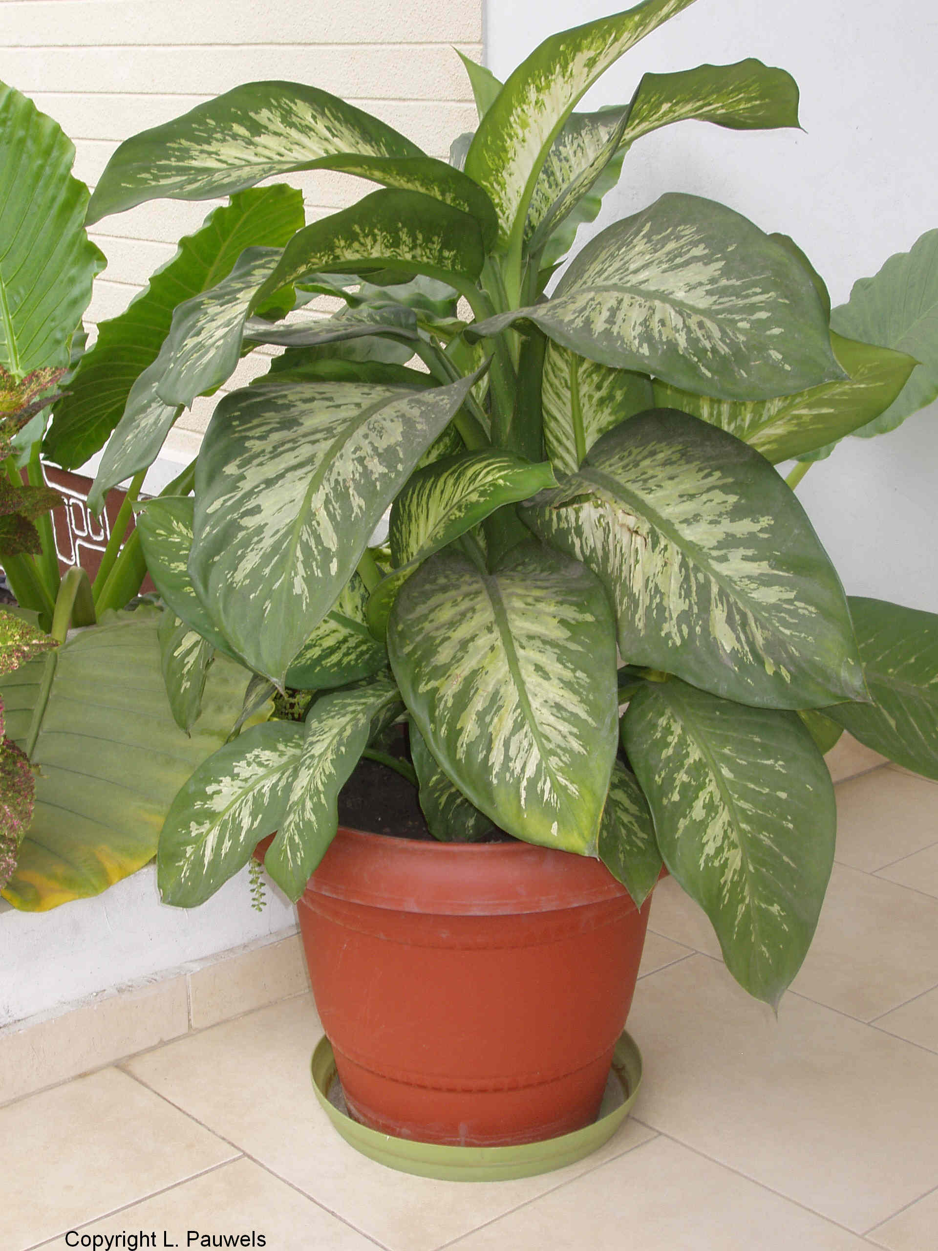 Indoor Plant Types About House Plants Garden Guides