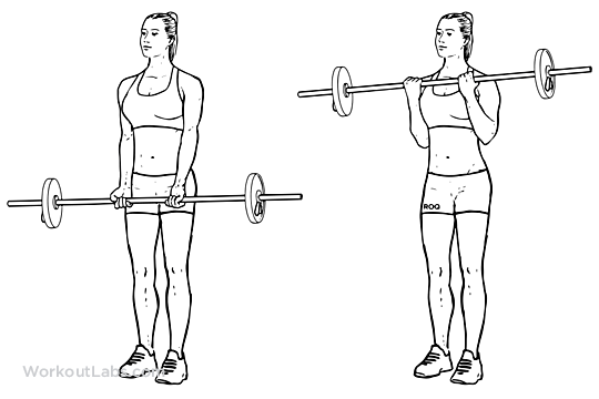 Barbell Curl Standing Biceps Curl Illustrated Exercise