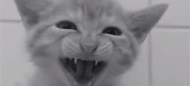 Gatos en 'Psicosis'