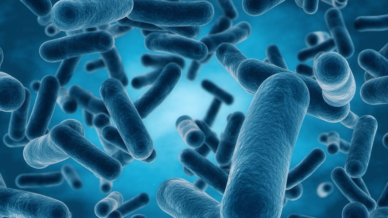3d Wallpaper Live Wallpaper Cdc Drug Resistant Nightmare Bacteria Pose Growing