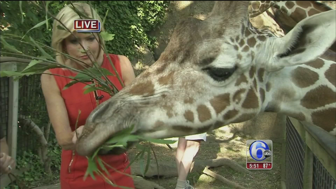 Toddler In Car Entertainment Video Cecily Tynan Feeds Stella The Giraffe At