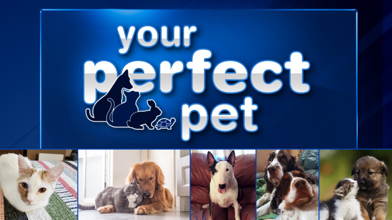 Picture Perfect Perfect Pet Abc7chicago