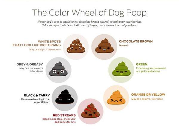 Dog Diarrhea Treatment, Causes  Remedies