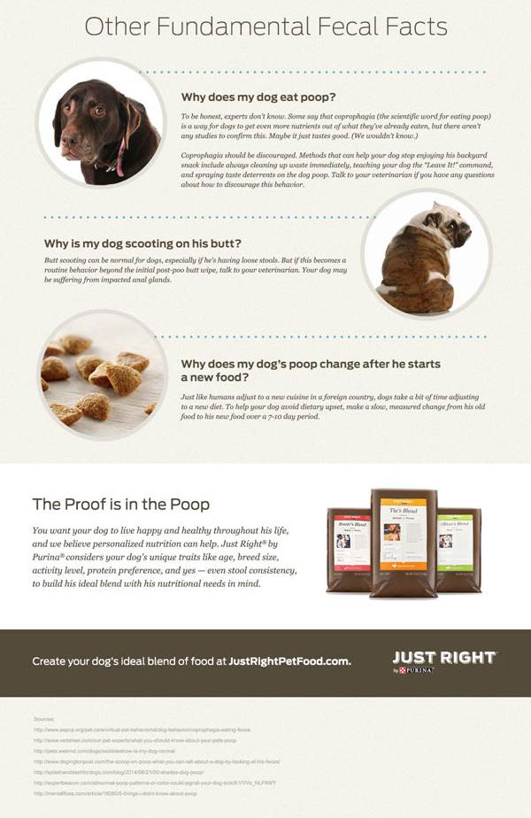 What Your Dog\u0027s Poop Says About His Health \u2013 American Kennel Club