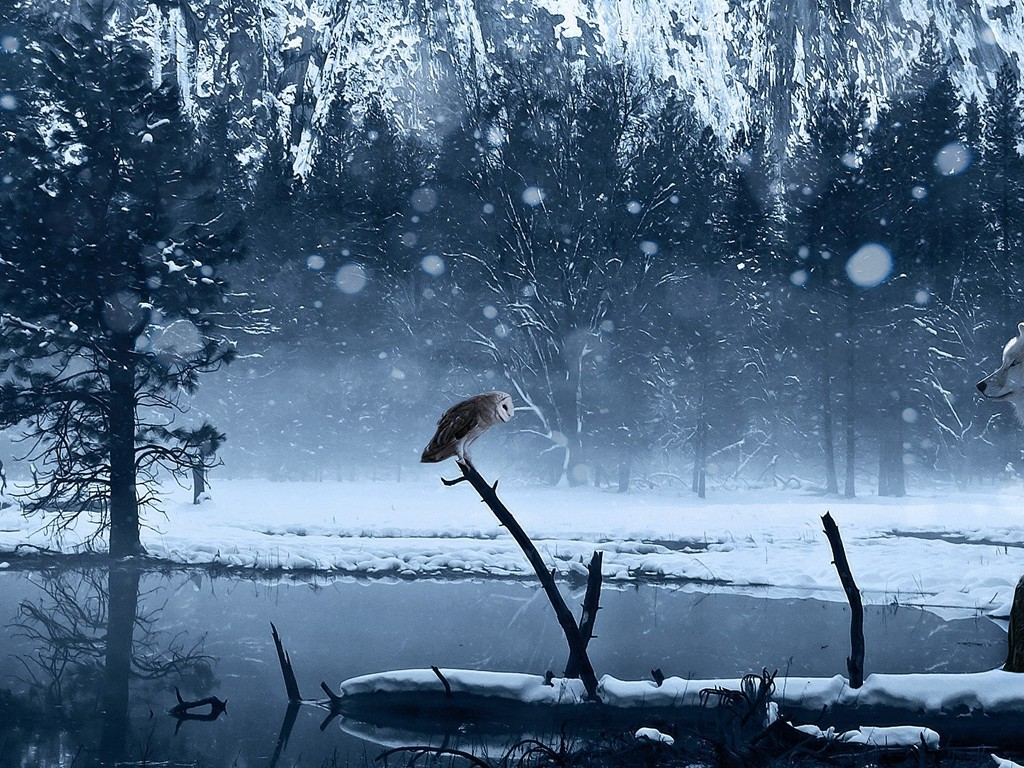 Ice Wolf 3d Wallpaper Wolf And Owl Staring Contest Wallpaper Allwallpaper In