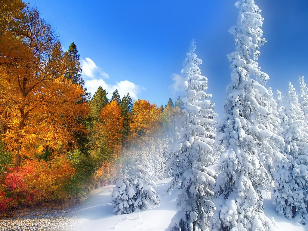Microsoft Wallpaper Fall Fall To Winter Wallpaper Allwallpaper In 6293 Pc En
