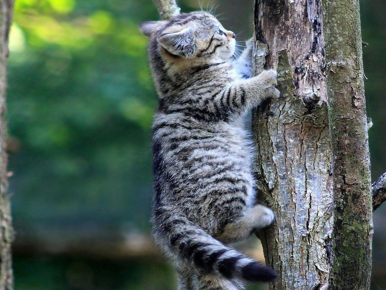 I Want To Download Cute Wallpapers Kitten Climbing A Tree Wallpaper Allwallpaper In 204