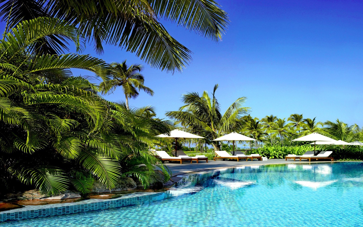 3d Wallpapers For Pc 1920x1080 Free Download Palm Trees Swimming Pools Tropical Wallpaper
