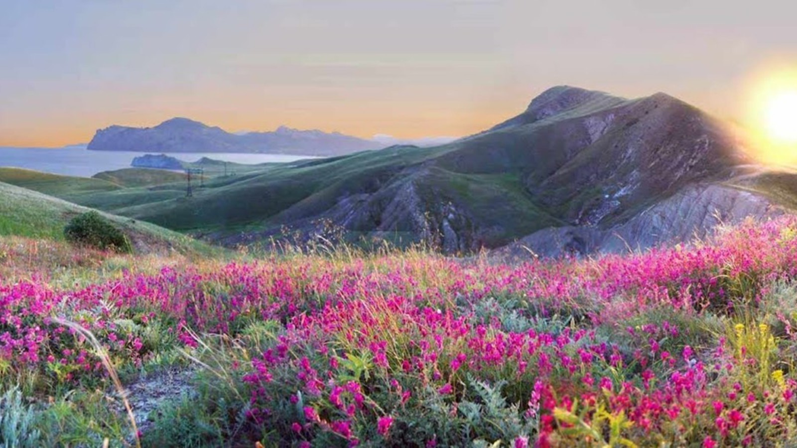 Best Iphone 5 Home Screen Wallpapers Landscapes Nature Flowers Yellow Pink Grass Hills