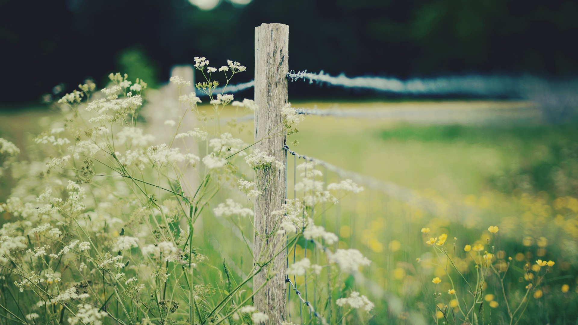 Home Screen Wallpaper Fall Nature White Flowers Yellow Depth Of Field Wallpaper