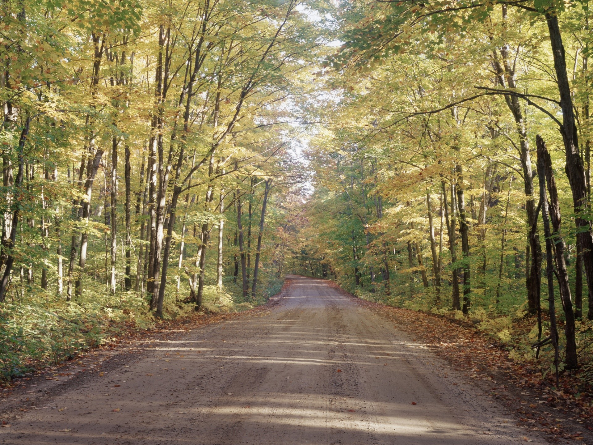 Microsoft Wallpaper Fall Pretty Forest Road Wallpaper Allwallpaper In 11363 Pc