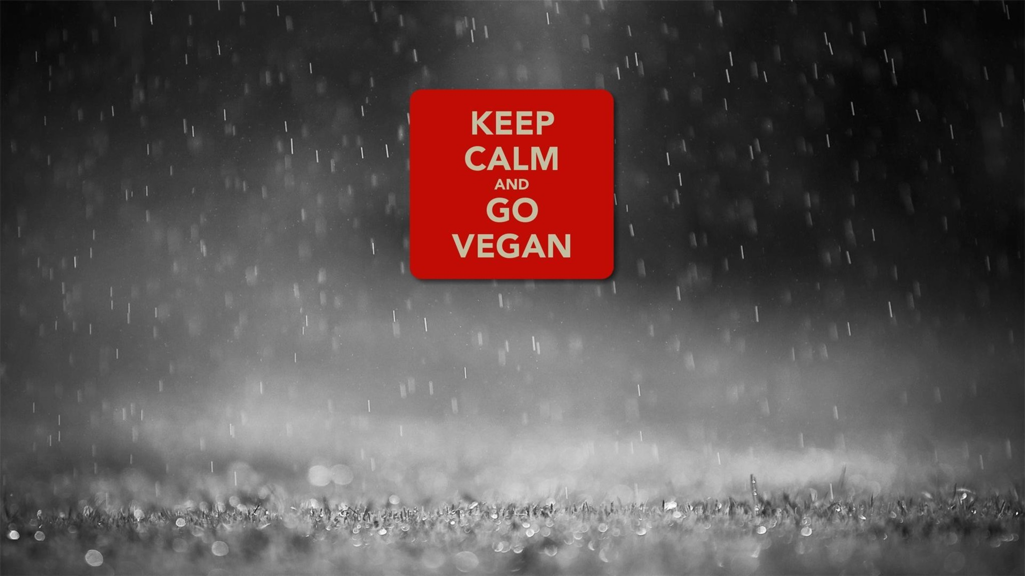 How To Set Animated Wallpaper Keep Calm And Go Vegan Wallpaper Allwallpaper In 6060