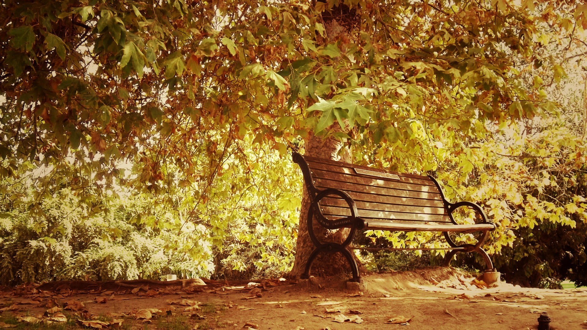 Microsoft Fall Wallpaper Autumn Bench Landscapes Nature Park Wallpaper