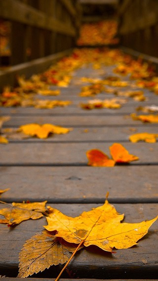 Free Fall Themed Desktop Wallpaper Woods Wooden Bridge Colors Peaceful View Autumn Wallpaper