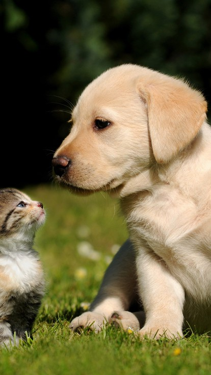 Cute Dogs And Puppies Wallpaper For Mobile Nature Cats Animals Dogs Wallpaper Allwallpaper In 7101