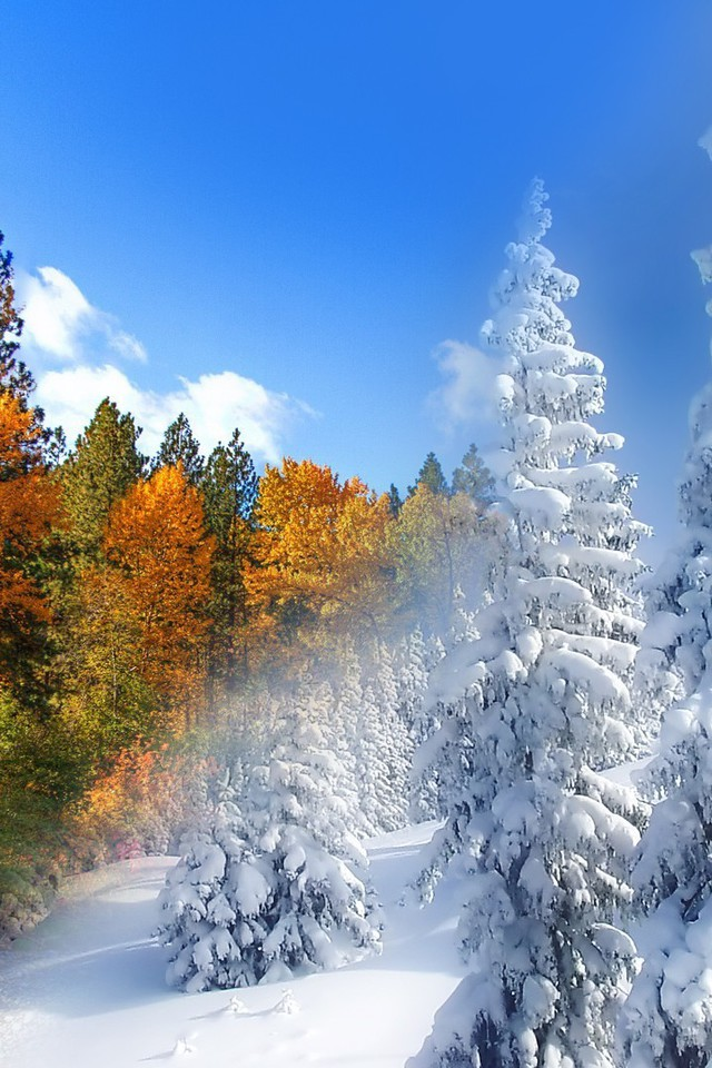 Dark Fall Wallpaper Fall To Winter Wallpaper Allwallpaper In 6293 Pc En