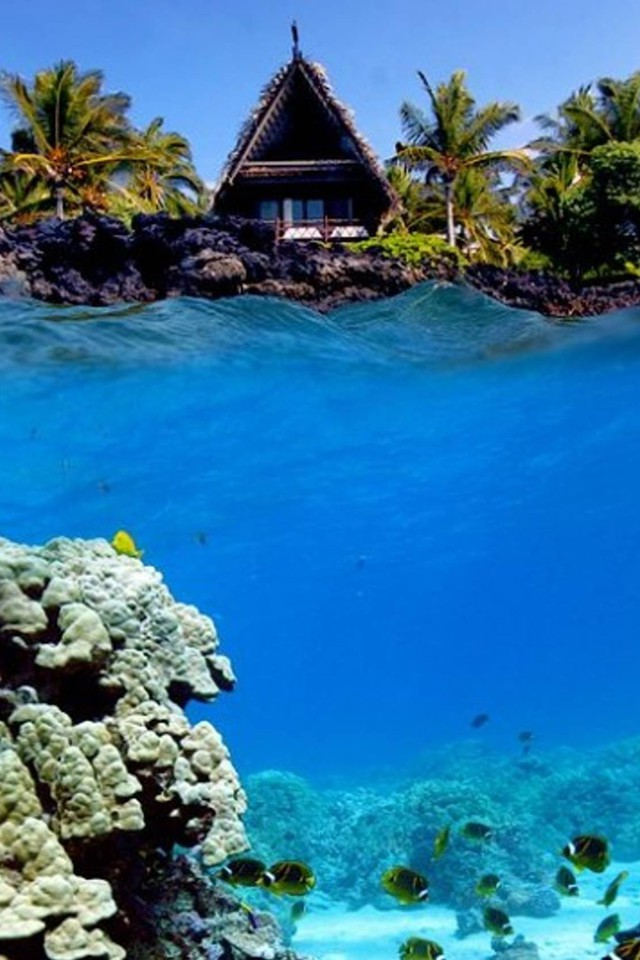 Coral Reef Wallpaper Hd Underwater Shot Of Coral Reef And Beach Hut Wallpaper