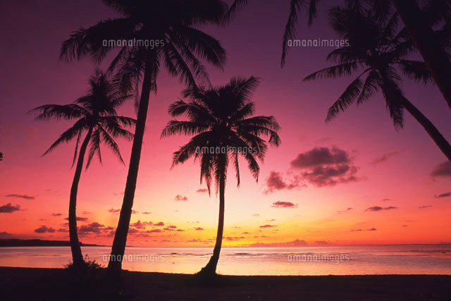 3d Wallpaper Gyro 椰子の木と夕暮れ 28144071741 | 写真素材・ストックフォト・画像・イラスト素材|アマナイメージズ