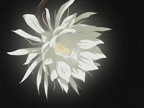 Cute Hawii Wallpapers Anime Flowers Flowers Ideas For Review
