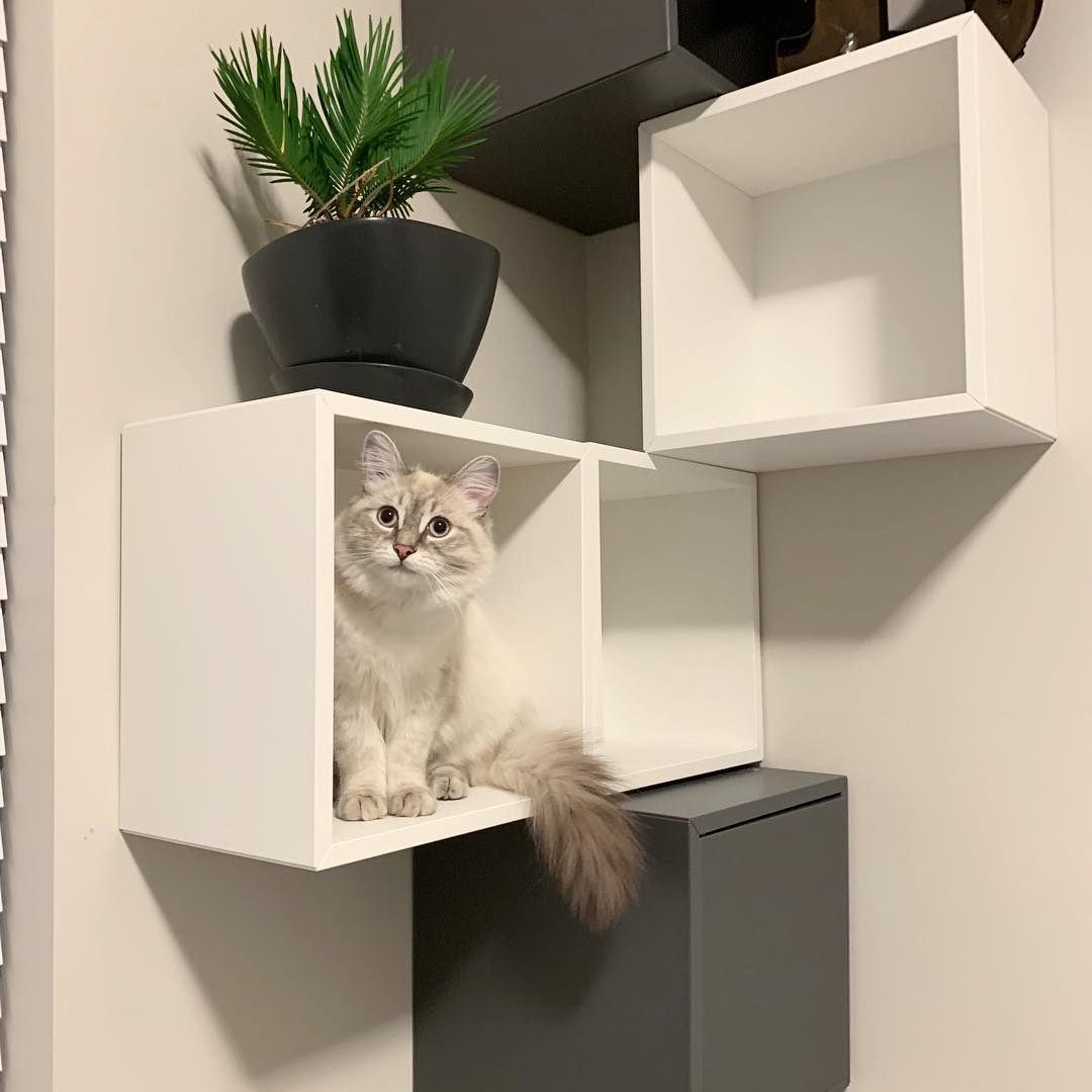 9 Stylish Ikea Hacks Your Cat Will Love Apartment Therapy