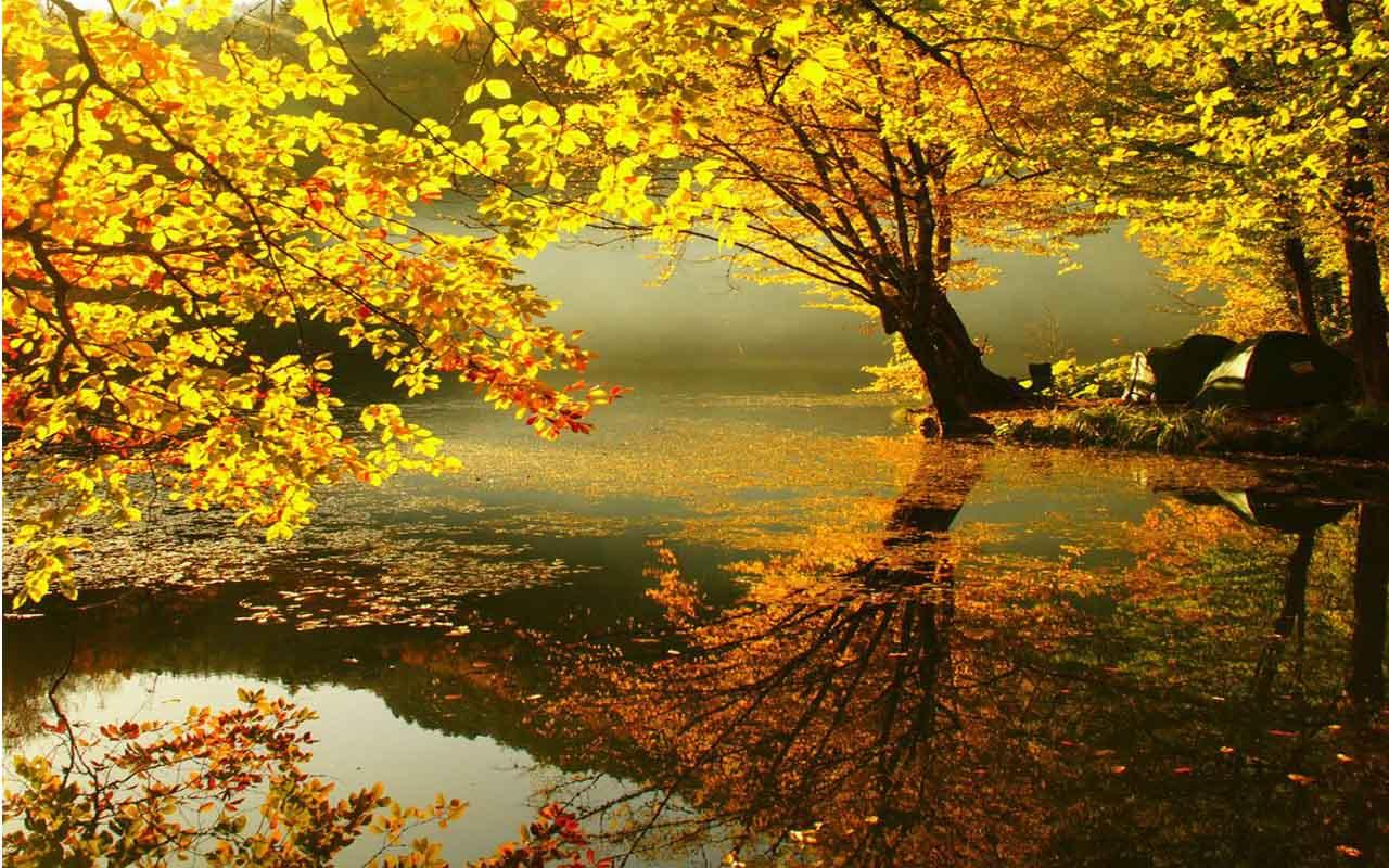 Fall Leaves Live Wallpaper Iphone Autumn Live Wallpapers 1 01 Apk Download Android