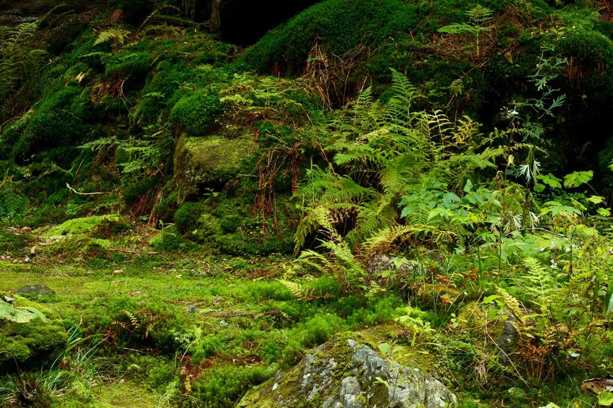 2012 The Lowline Delancey Underground Exhibit Hortus