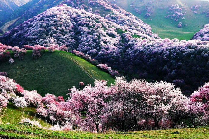 AD-The-34-Most-Beautifu-Forests-In-The-World-01