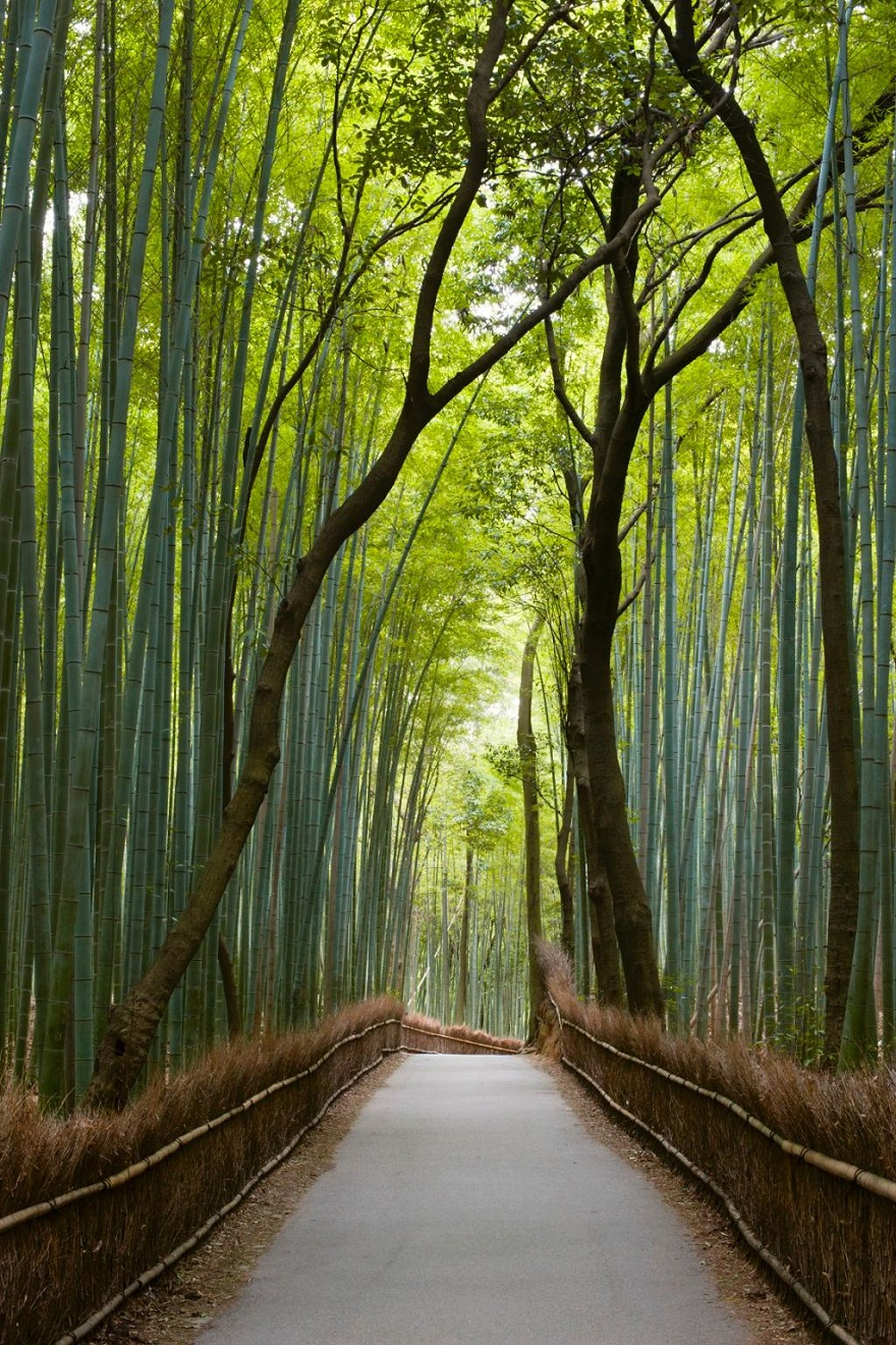 AD-The-34-Most-Beautifu-Forests-In-The-World-24