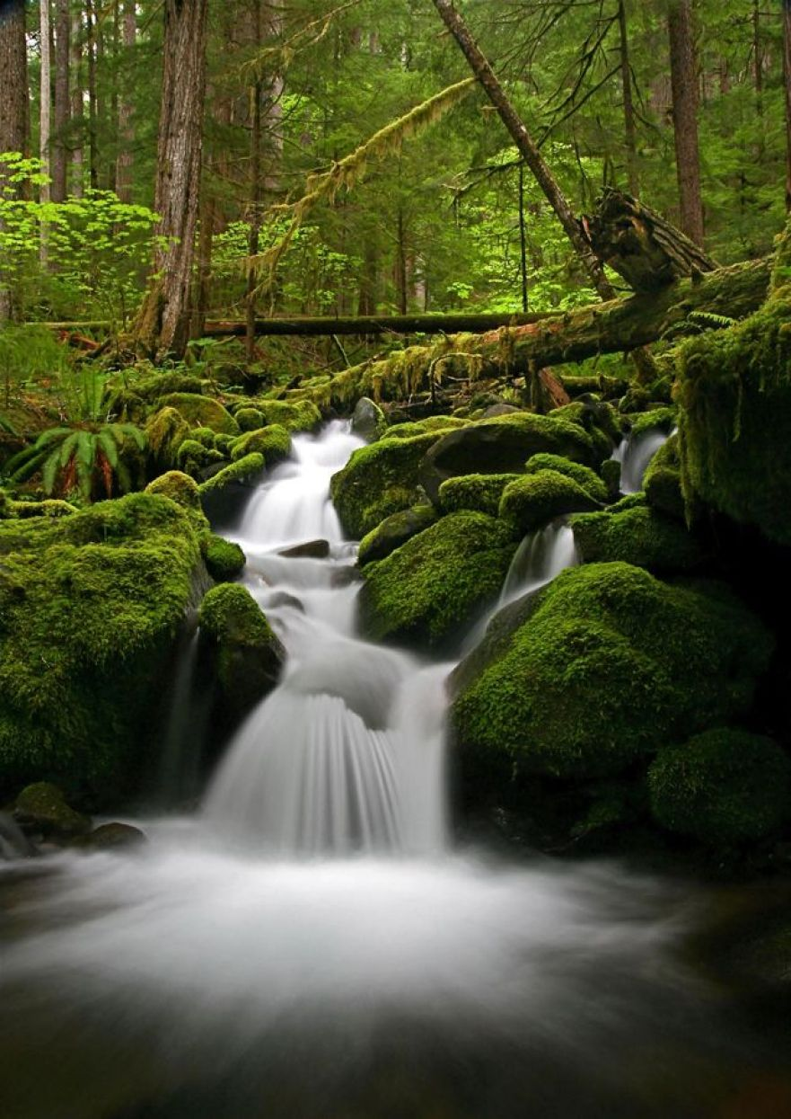 AD-The-34-Most-Beautifu-Forests-In-The-World-31