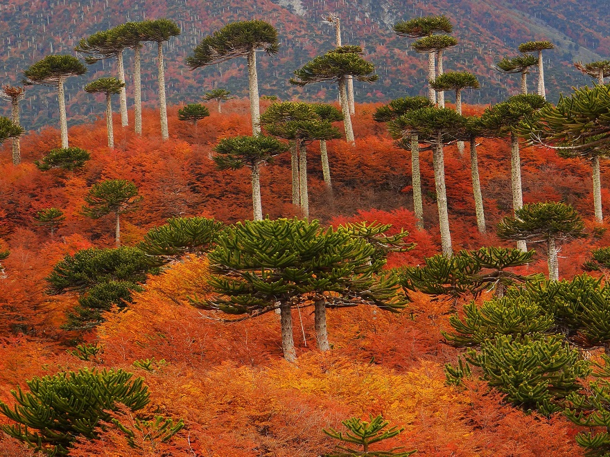 AD-The-34-Most-Beautifu-Forests-In-The-World-32