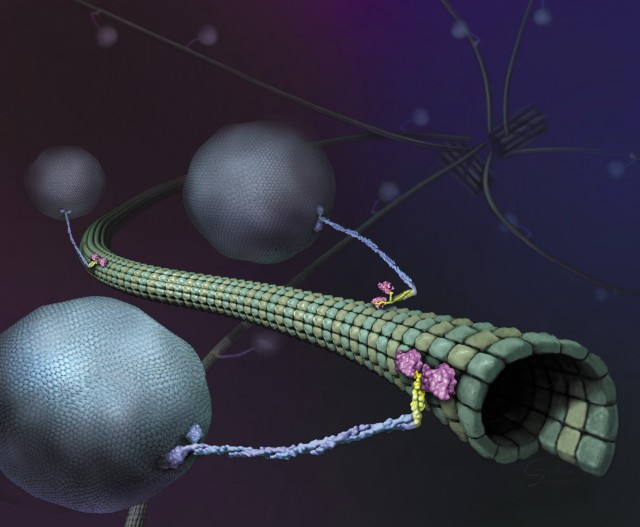Specialized Wallpaper Hd With Dna And Proteins Researchers Build Transit For