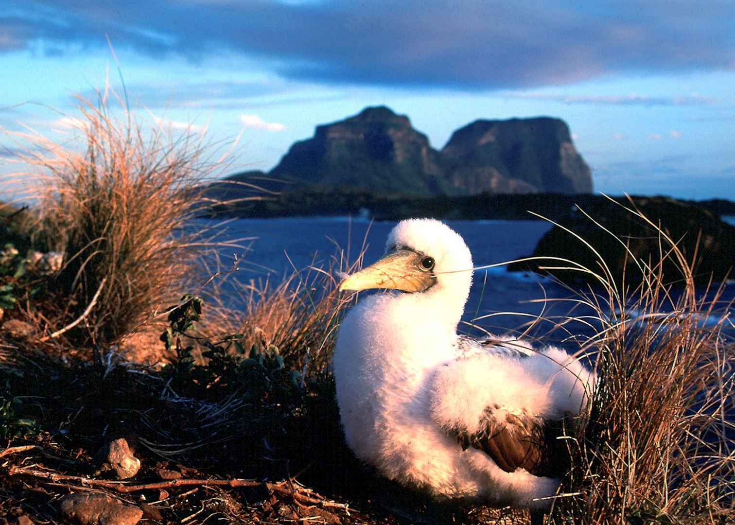 Tom Taior Visit Lord Howe Island On A Trip To Australia | Audley Travel
