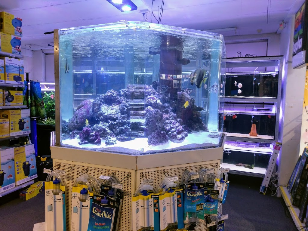 Light Shop Anzac Highway Seaview Aquarium Centre Pet Store 237 Anzac Hwy Plympton Sa