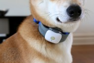 Tagg Pet Tracker Review - Image 1 of 11