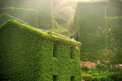 Abandoned Chinese Village Buildings Vines