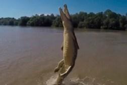 Terrifying Crocodile Jump