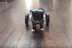 3D Printed Wheelchair Kitten Video