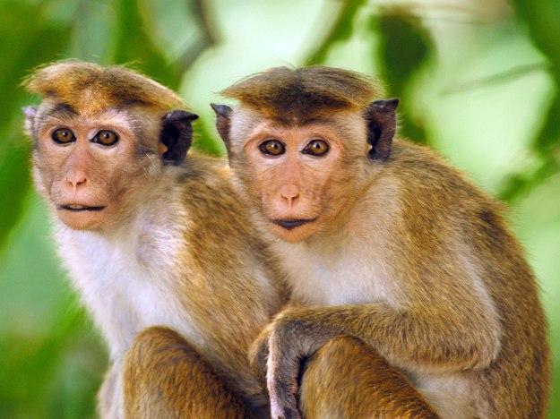 www monkey go happy com