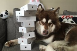 iPhone 7 Sold Out Coco Dog