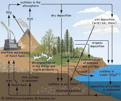 Sulfur cycle ecology Britannica