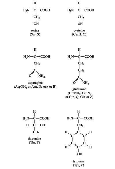 amino acid Definition, Structure,  Facts Britannica