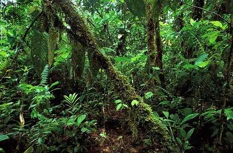 Tropical Rainforest Climate Animals Facts