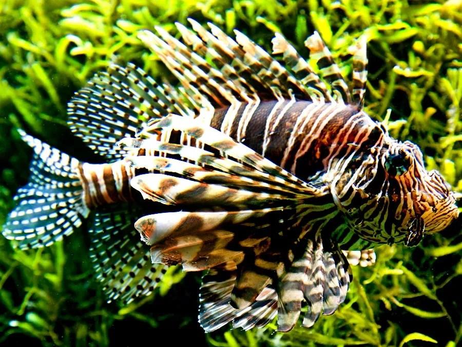 10 of the World\u0027s Most Dangerous Fish Britannica