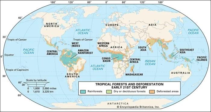 tropical rainforest Climate, Animals,  Facts Britannica